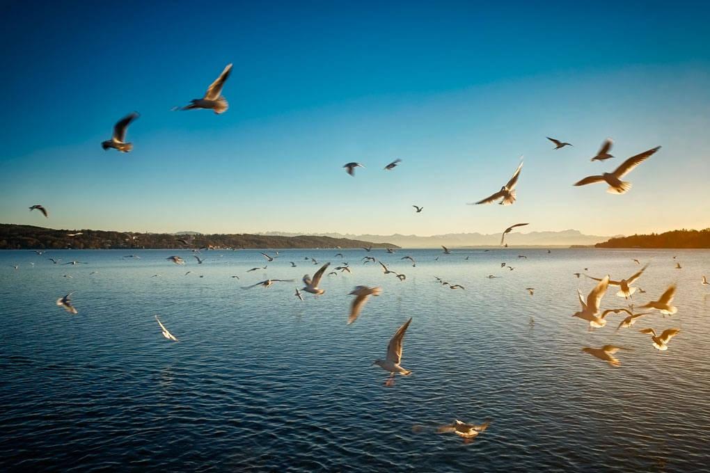 vögel, birds, starnberger see, bavaria, bayern, germany, deutschland, fine art photography, thomas menk, photography,