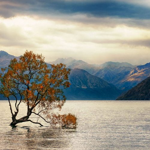 new zealand, neuseeland, wanaka tree, fine art photography, thomas menk, photography, wanaka,