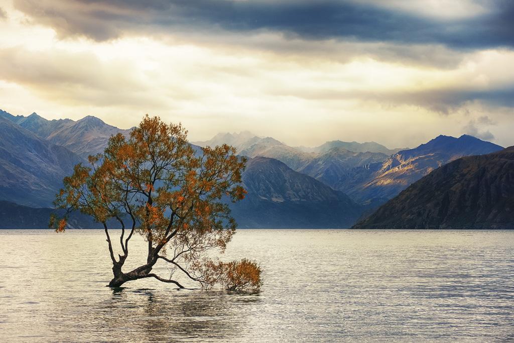 SAVORING LIFE INTENSELY  | NEW ZEALAND