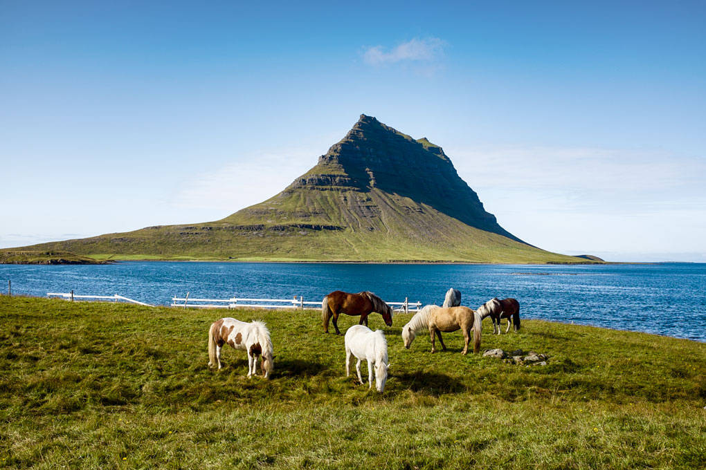MY REALITY   ICELAND