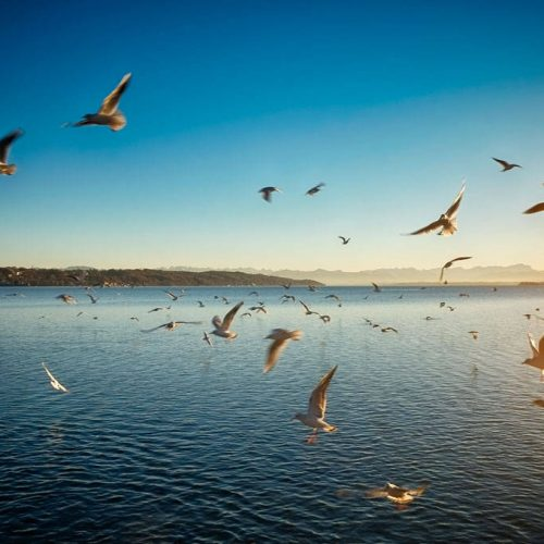 vögel, birds, starnberger see, bavaria, bayern, germany, deutschland, fine art photography, thomas menk, photography,